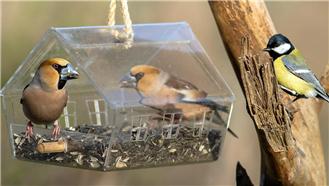 非金属板激光切割机,建筑鸟巢,建筑鸟儿温馨之家